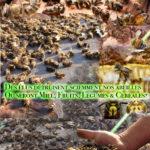Des élus détruisent sciemment nos abeilles